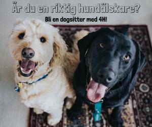 4h Dogsitter